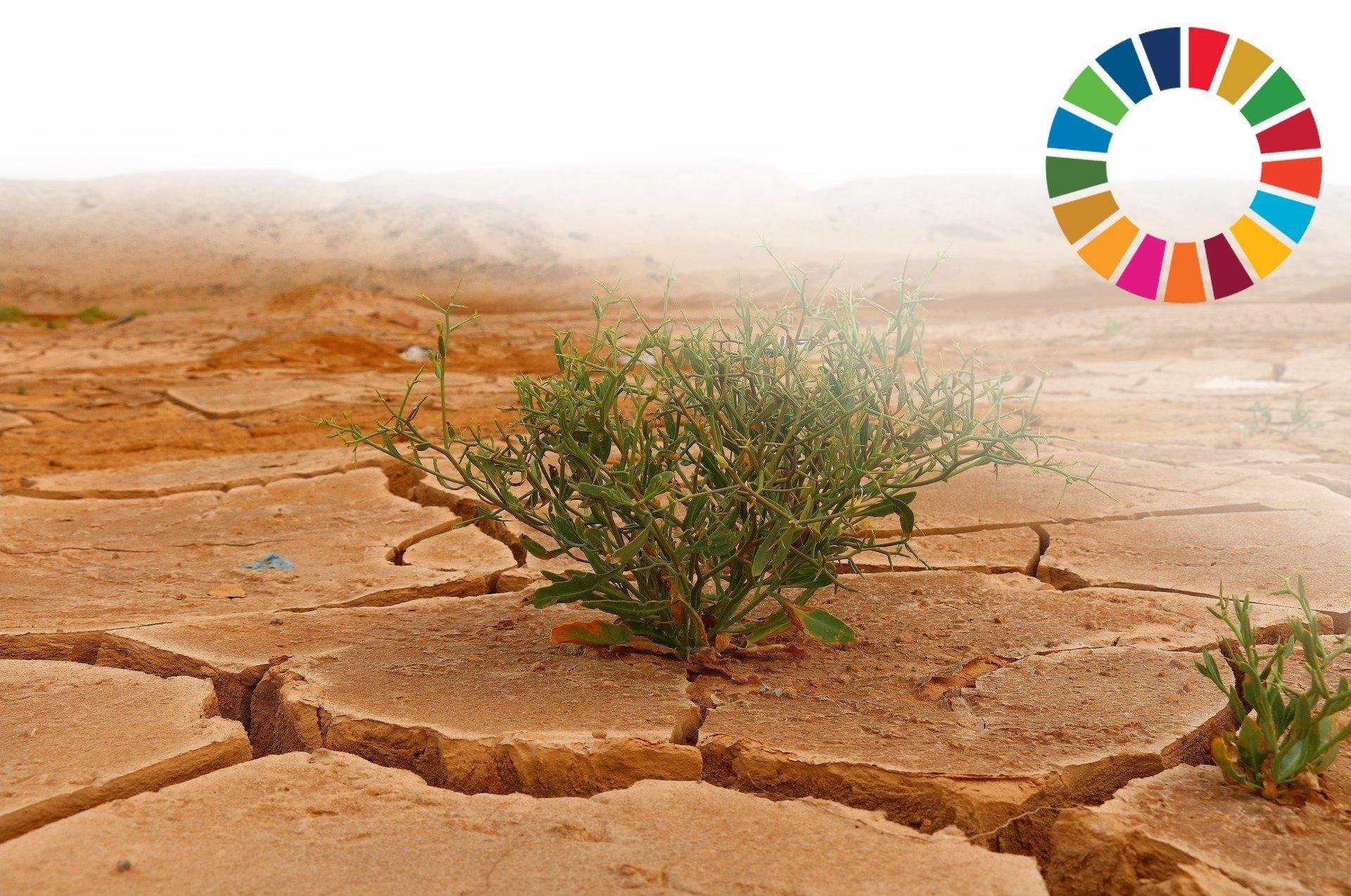 desert-goal-2030