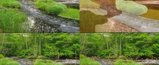 seguimiento de la implantación de caudales ambientales